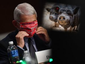 EP 1998-6P FAUCI WARNS ON CHINA PIG-VIRUS – COULD CAUSE ANOTHER PANDEMIC